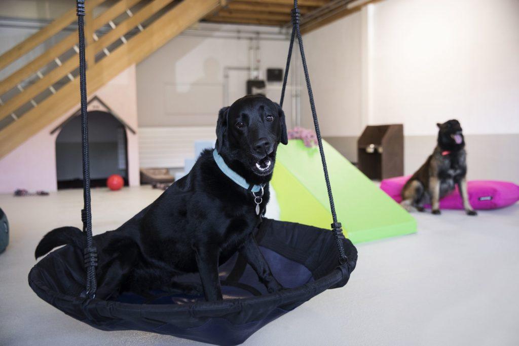 Fun Dog Garderie