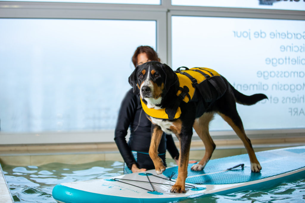Fun Dog Garderie Cours paddle